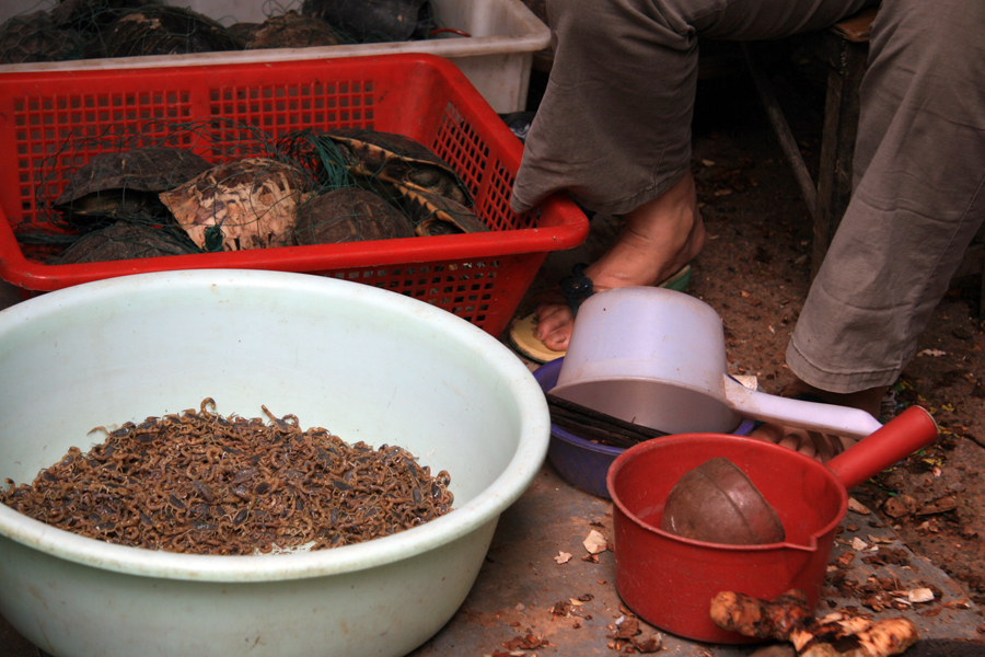 Scorpions for sale
