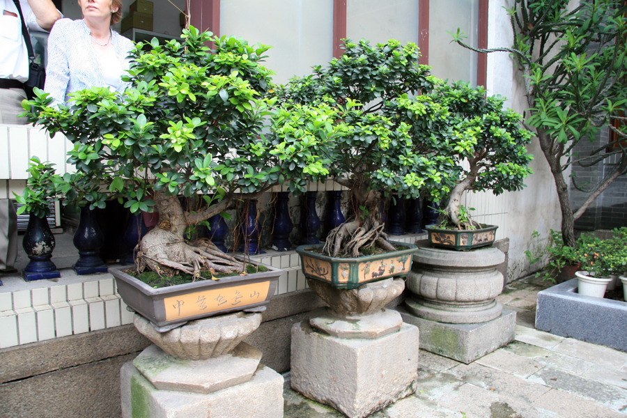 Enormous Bonsai, Temple of Six Banyan Trees