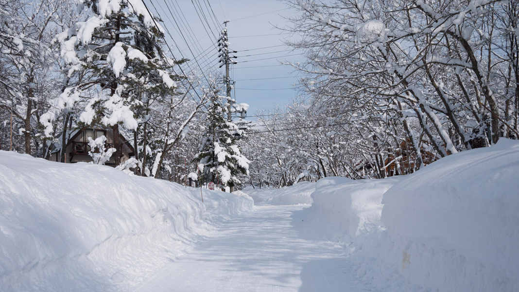 Our street in Hakuba in Meitetsu forest