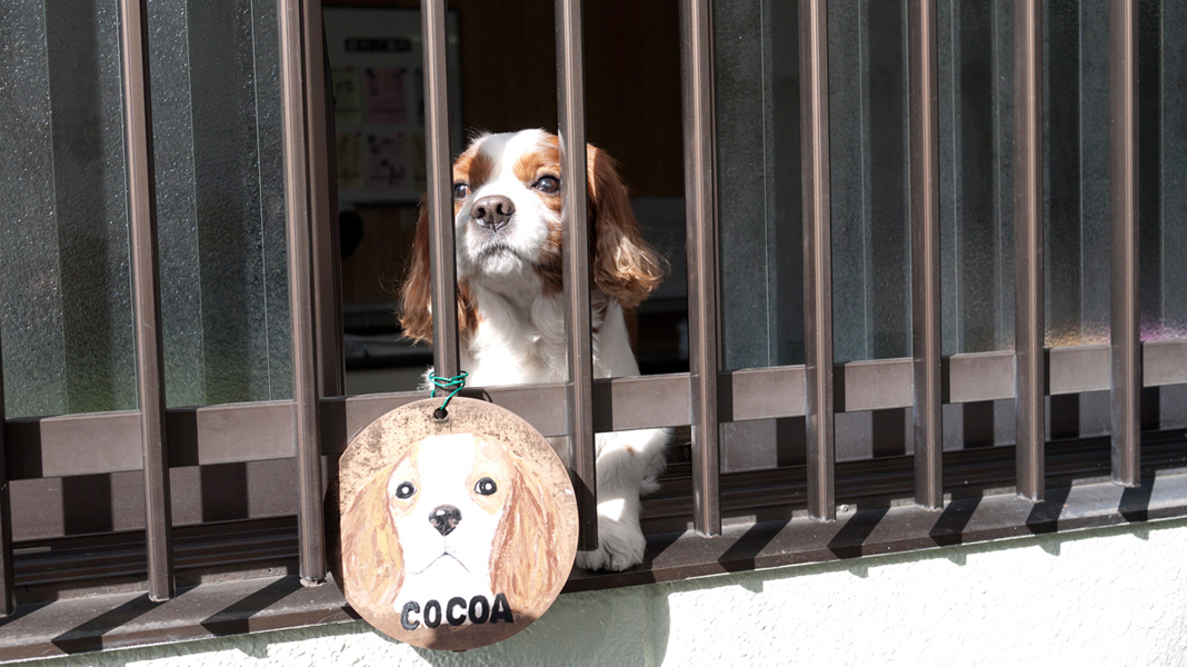 watch dog in Kyoto