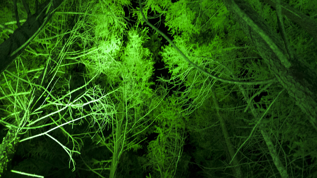 spooky green trees