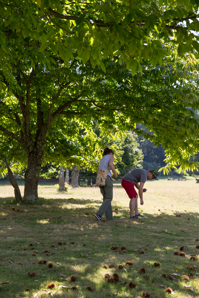 chestnut-picking-24